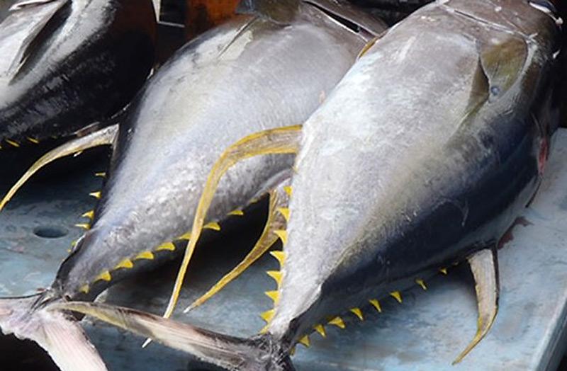 Exotic fish: the Tuna Fish